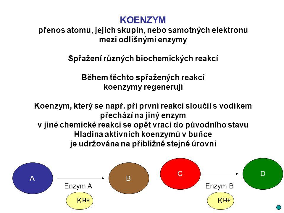 KOENZYM přenos atomů, jejich skupin, nebo samotných elektronů mezi odlišnými enzymy Spřažení různých biochemických reakcí Během těchto spřažených reak