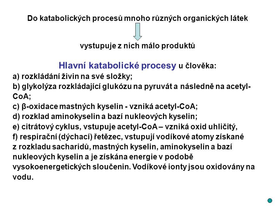 Do katabolických procesů mnoho různých organických látek vystupuje z nich málo produktů Hlavní katabolické procesy u člověka: a) rozkládání živin na s
