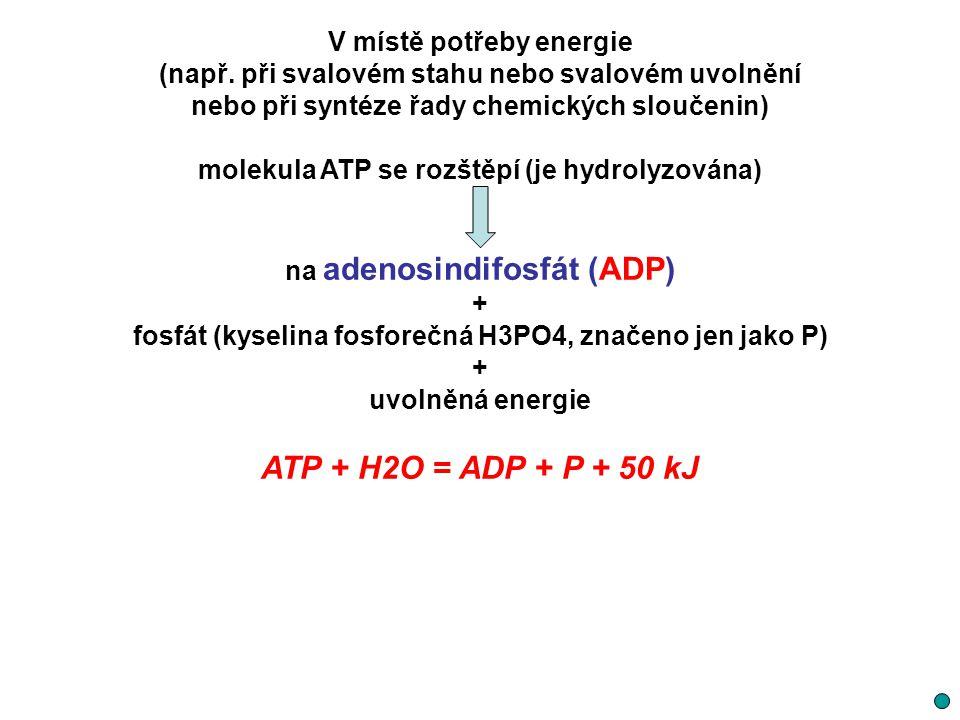 V místě potřeby energie (např. při svalovém stahu nebo svalovém uvolnění nebo při syntéze řady chemických sloučenin) molekula ATP se rozštěpí (je hydr