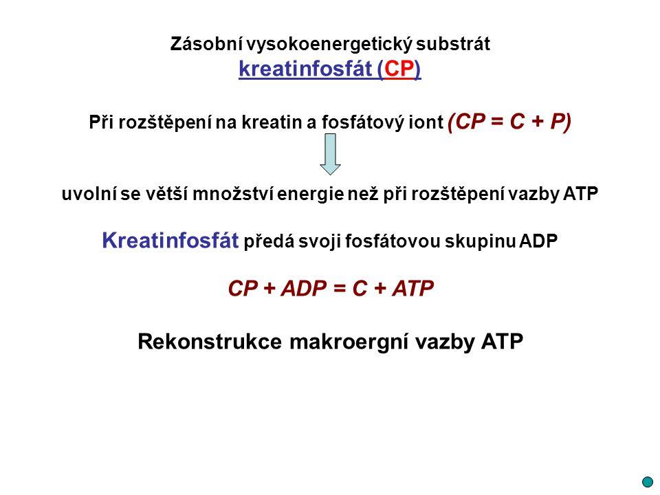 Zásobní vysokoenergetický substrát kreatinfosfát (CP) Při rozštěpení na kreatin a fosfátový iont (CP = C + P) uvolní se větší množství energie než při