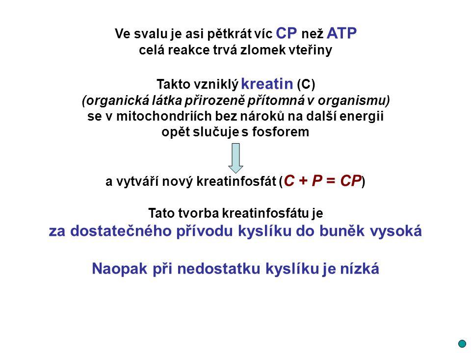 Ve svalu je asi pětkrát víc CP než ATP celá reakce trvá zlomek vteřiny Takto vzniklý kreatin (C) (organická látka přirozeně přítomná v organismu) se v