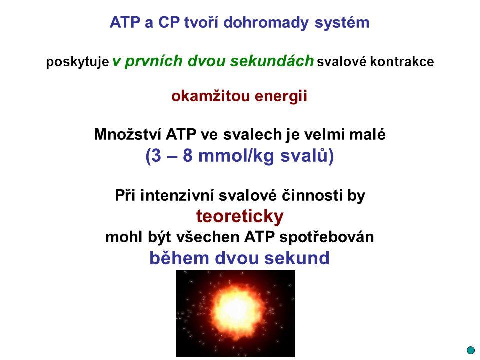 ATP a CP tvoří dohromady systém poskytuje v prvních dvou sekundách svalové kontrakce okamžitou energii Množství ATP ve svalech je velmi malé (3 – 8 mm