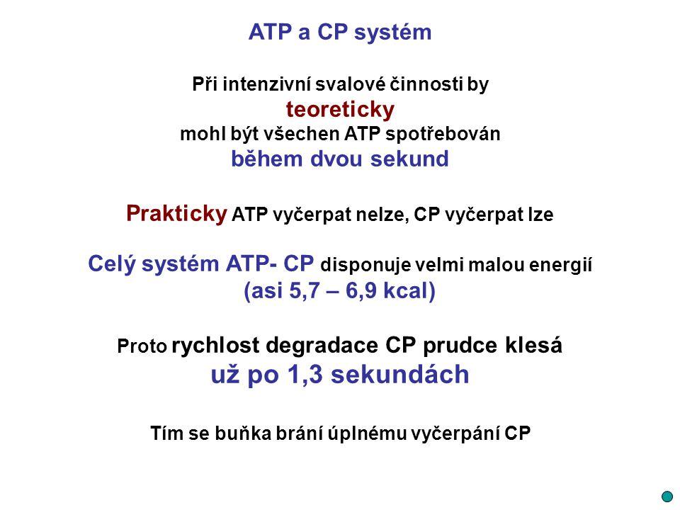 ATP a CP systém Při intenzivní svalové činnosti by teoreticky mohl být všechen ATP spotřebován během dvou sekund Prakticky ATP vyčerpat nelze, CP vyče