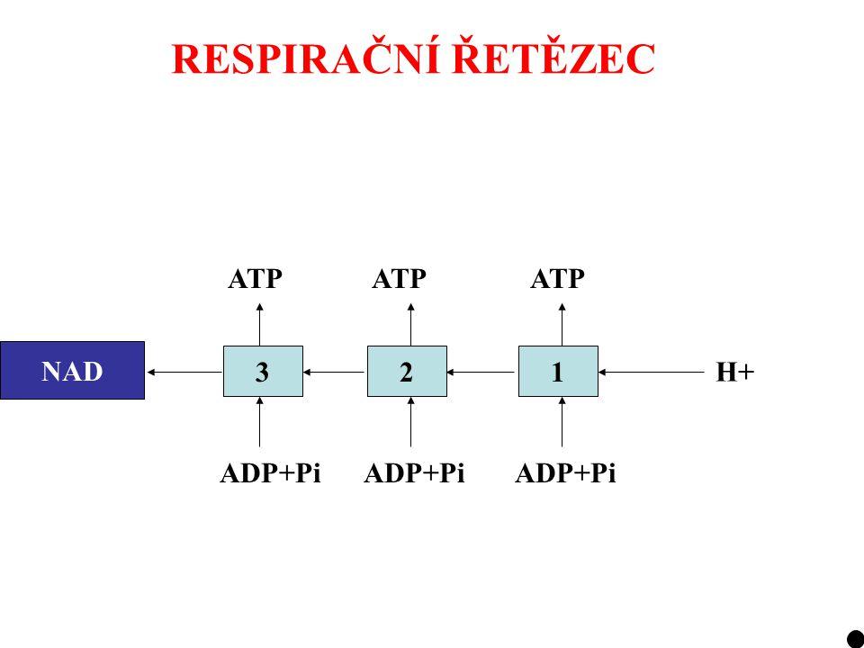 RESPIRAČNÍ ŘETĚZEC NADH321 H+ ADP+Pi ATP NAD