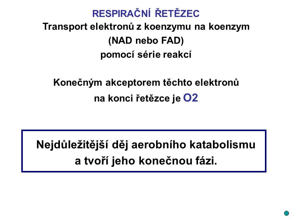 RESPIRAČNÍ ŘETĚZEC Transport elektronů z koenzymu na koenzym (NAD nebo FAD) pomocí série reakcí Konečným akceptorem těchto elektronů na konci řetězce