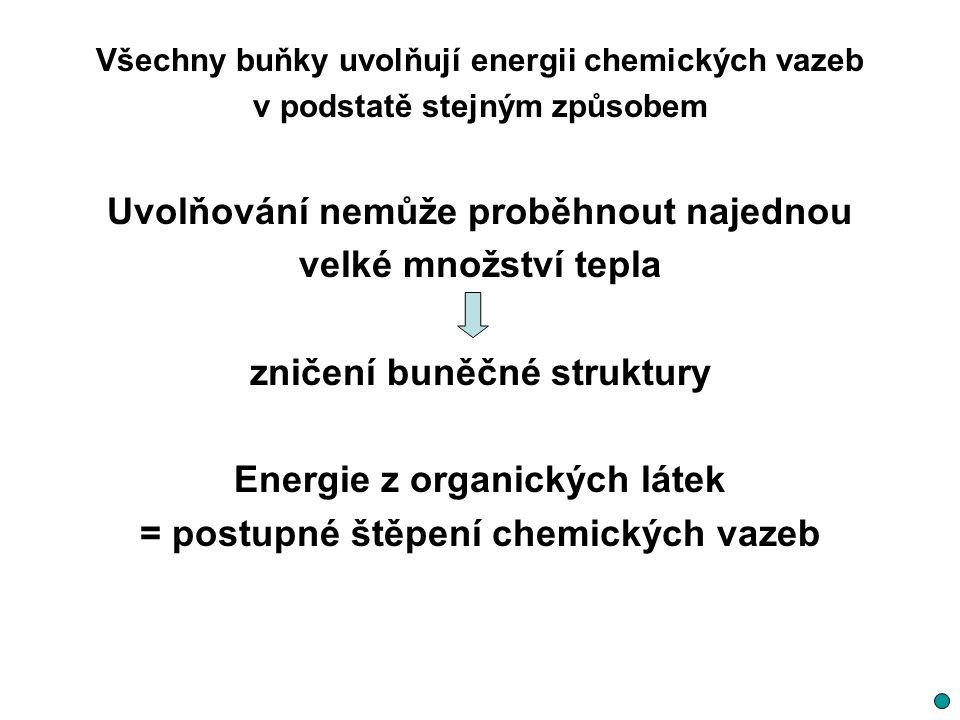 Všechny buňky uvolňují energii chemických vazeb v podstatě stejným způsobem Uvolňování nemůže proběhnout najednou velké množství tepla zničení buněčné