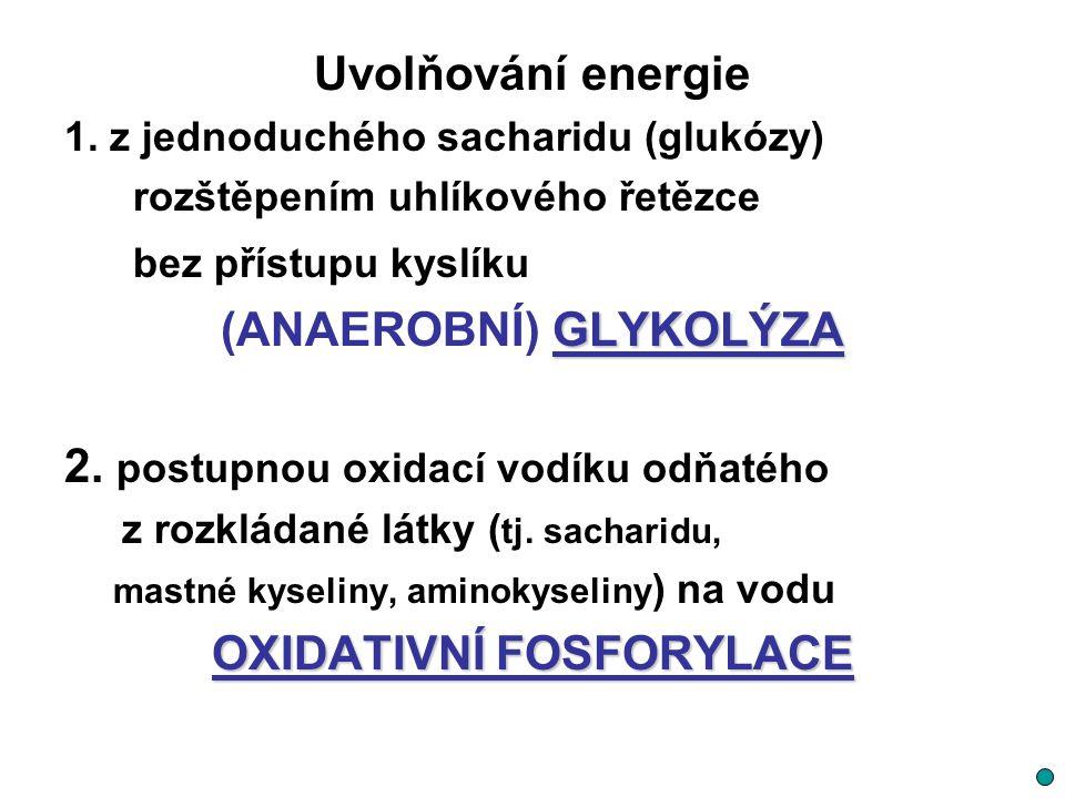 Uvolňování energie 1. z jednoduchého sacharidu (glukózy) rozštěpením uhlíkového řetězce bez přístupu kyslíku GLYKOLÝZA (ANAEROBNÍ) GLYKOLÝZA 2. postup