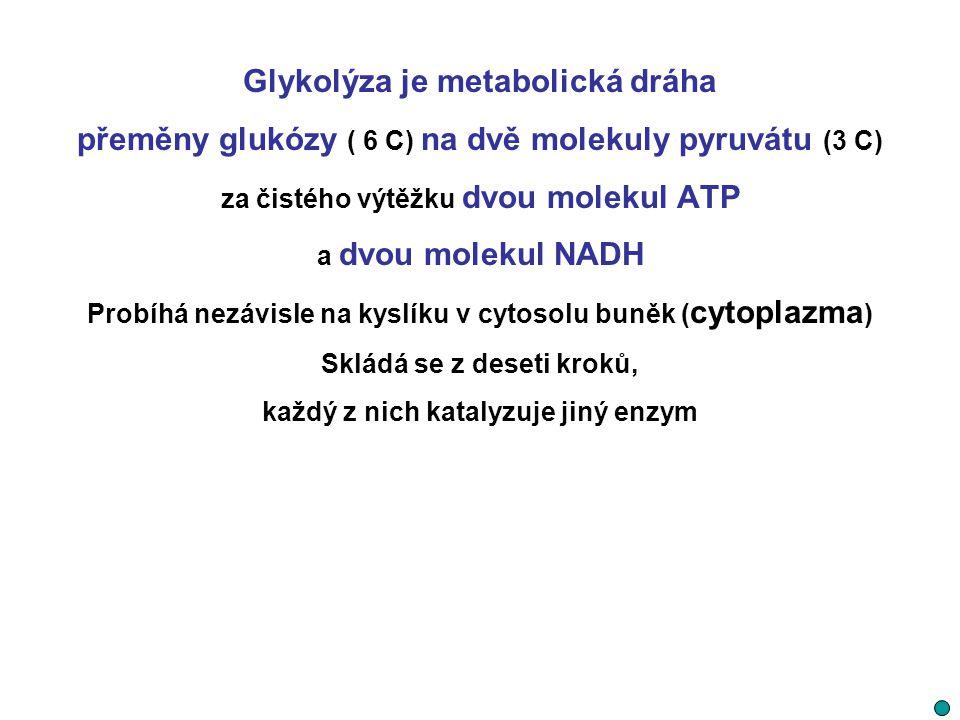 Glykolýza je metabolická dráha přeměny glukózy ( 6 C) na dvě molekuly pyruvátu (3 C) za čistého výtěžku dvou molekul ATP a dvou molekul NADH Probíhá n