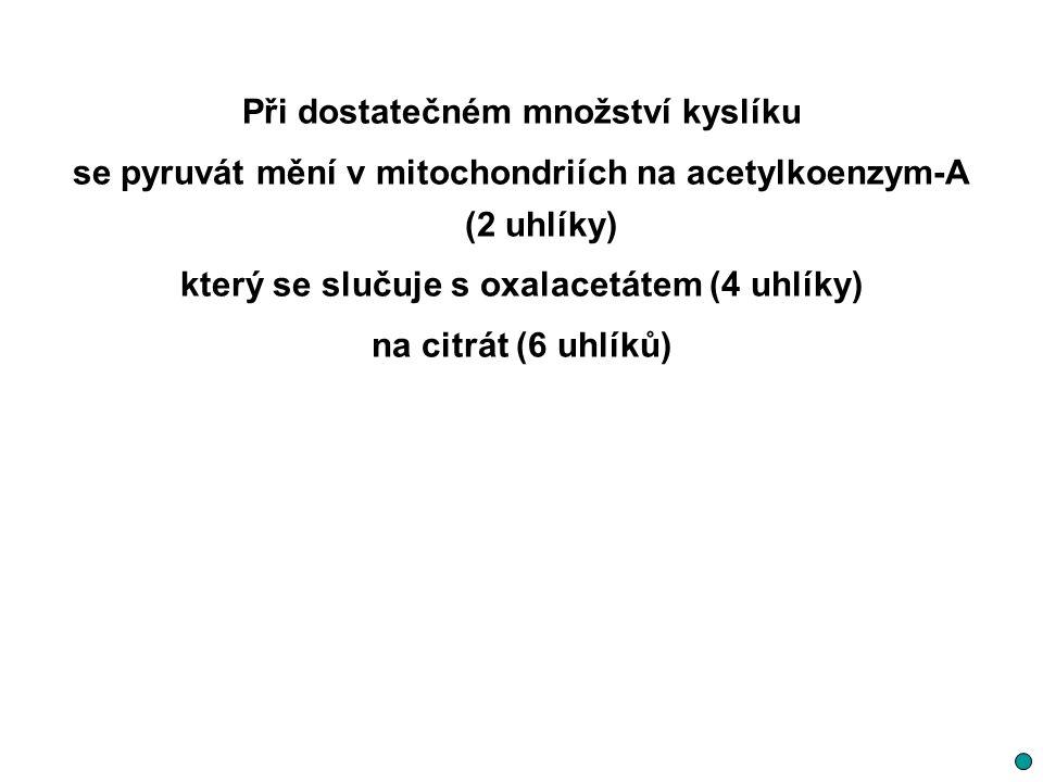 Při dostatečném množství kyslíku se pyruvát mění v mitochondriích na acetylkoenzym-A (2 uhlíky) který se slučuje s oxalacetátem (4 uhlíky) na citrát (