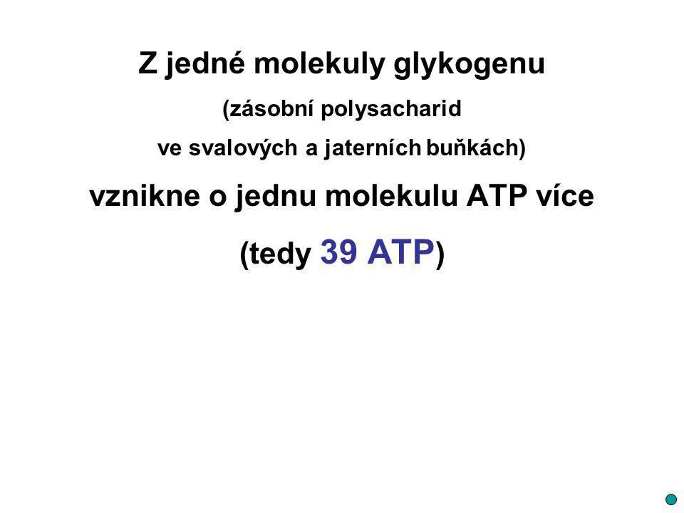 Z jedné molekuly glykogenu (zásobní polysacharid ve svalových a jaterních buňkách) vznikne o jednu molekulu ATP více (tedy 39 ATP )
