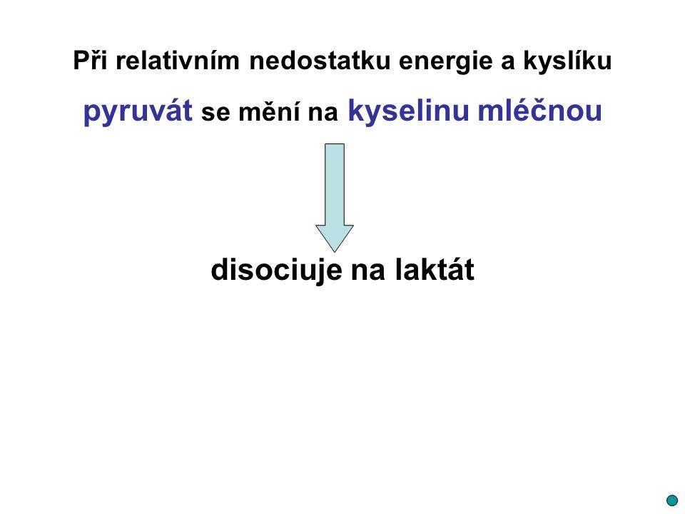 Při relativním nedostatku energie a kyslíku pyruvát se mění na kyselinu mléčnou disociuje na laktát