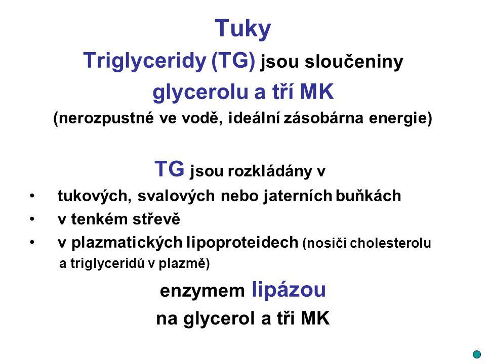 Tuky Triglyceridy (TG) jsou sloučeniny glycerolu a tří MK (nerozpustné ve vodě, ideální zásobárna energie) TG jsou rozkládány v tukových, svalových ne