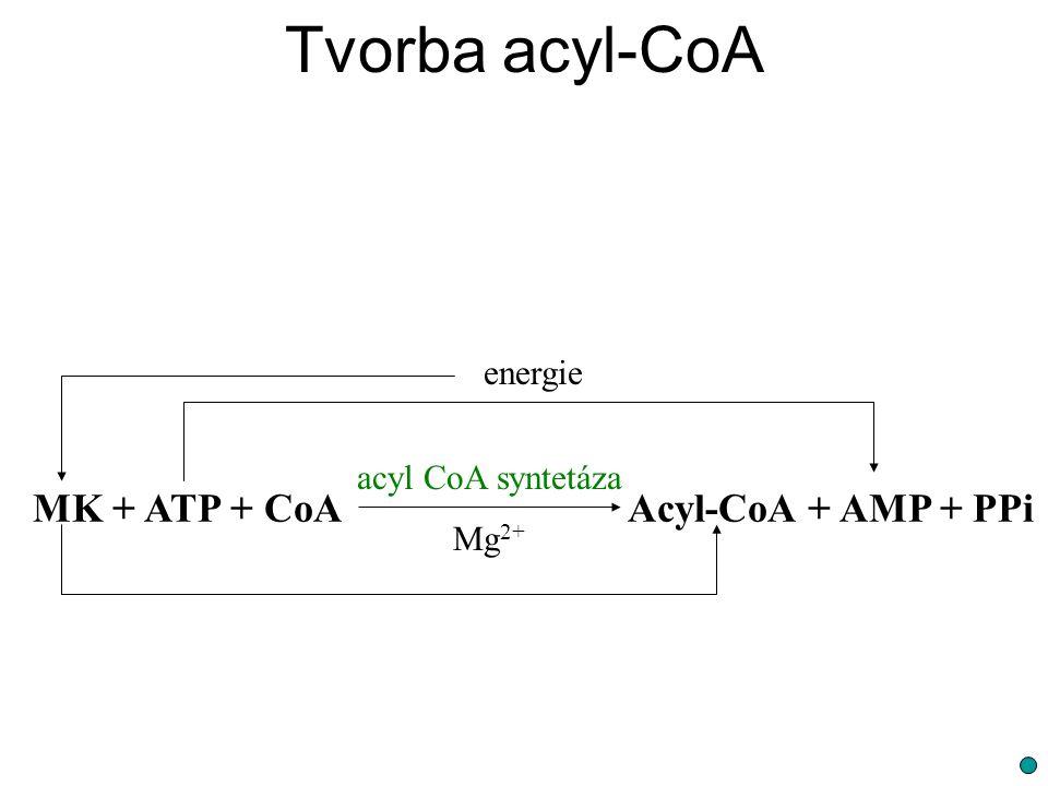 Tvorba acyl-CoA MK + ATP + CoAAcyl-CoA + AMP + PPi acyl CoA syntetáza Mg 2+ energie