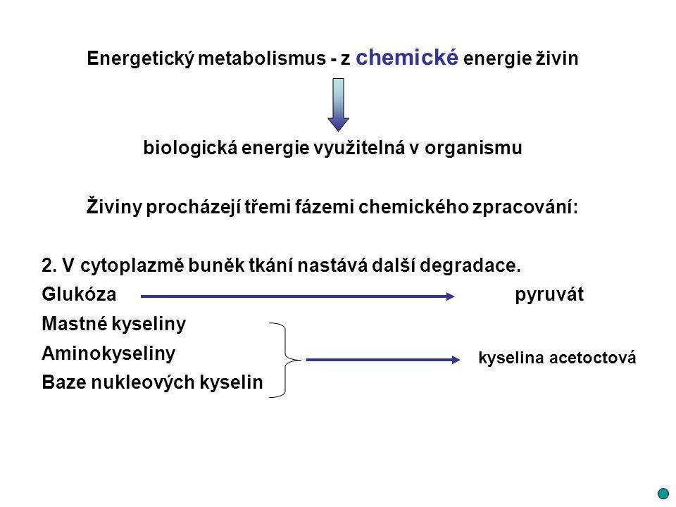 Energie uvolněná katabolismem není využitá buňkami přímo tvorba vazeb mezi zbytky kyseliny fosforečné a některými organickými sloučeninami (fosfáty) V těchto jednoduchých sloučeninách velké množství energie Při jejich rozložení (reakce s vodou = hydrolýza) se uvolňuje energie Vysokoenergetické (makroergické) fosfátové sloučeniny nejdůležitějším reprezentantem adenozintrifosfát (ATP)