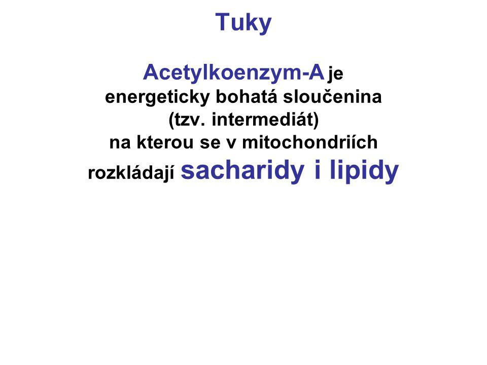 Tuky Acetylkoenzym-A je energeticky bohatá sloučenina (tzv. intermediát) na kterou se v mitochondriích rozkládají sacharidy i lipidy