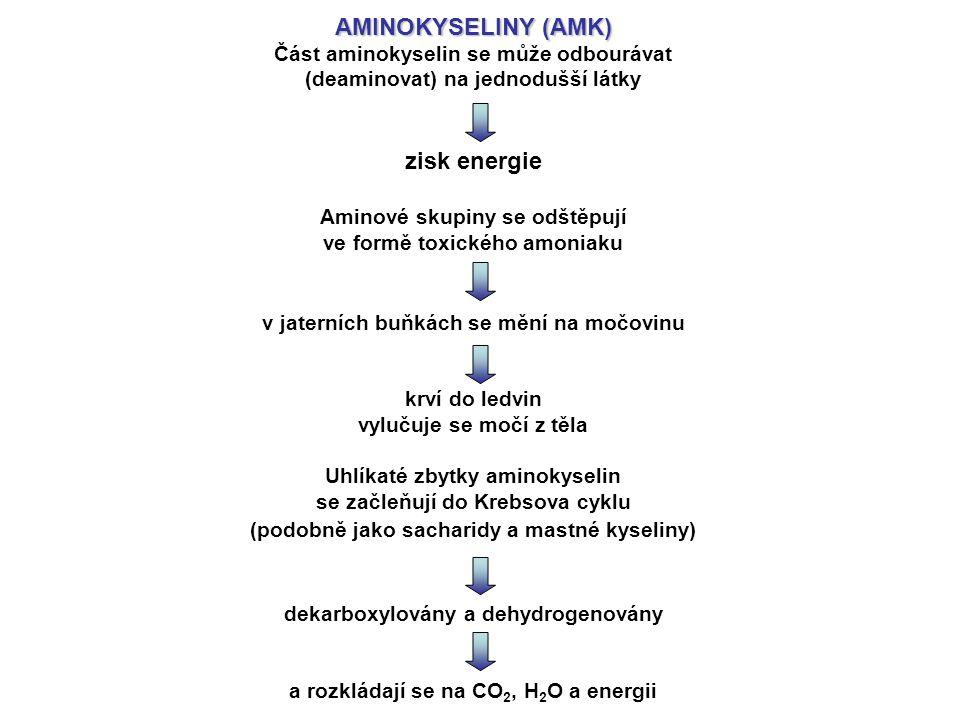 AMINOKYSELINY (AMK) Část aminokyselin se může odbourávat (deaminovat) na jednodušší látky zisk energie Aminové skupiny se odštěpují ve formě toxického