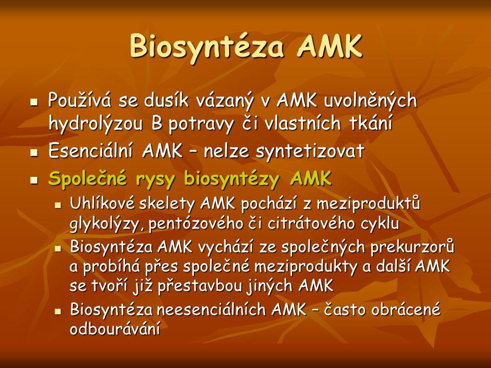 Biosyntéza AMK Používá se dusík vázaný v AMK uvolněných hydrolýzou B potravy či vlastních tkání Používá se dusík vázaný v AMK uvolněných hydrolýzou B