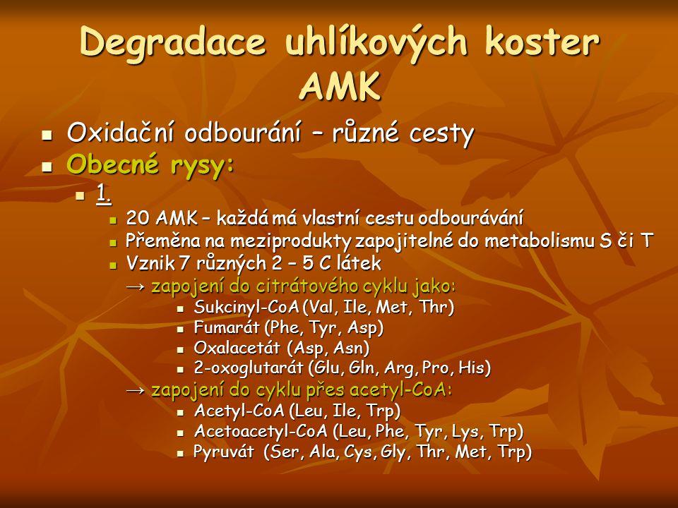 Degradace uhlíkových koster AMK Oxidační odbourání – různé cesty Oxidační odbourání – různé cesty Obecné rysy: Obecné rysy: 1. 1. 20 AMK – každá má vl