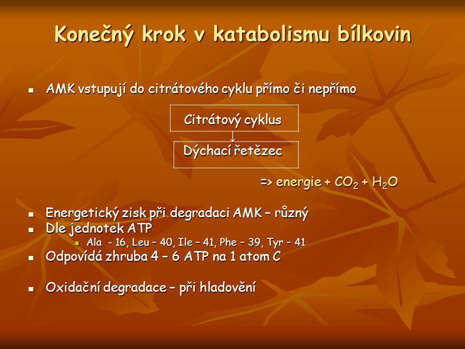 Konečný krok v katabolismu bílkovin AMK vstupují do citrátového cyklu přímo či nepřímo AMK vstupují do citrátového cyklu přímo či nepřímo Citrátový cy