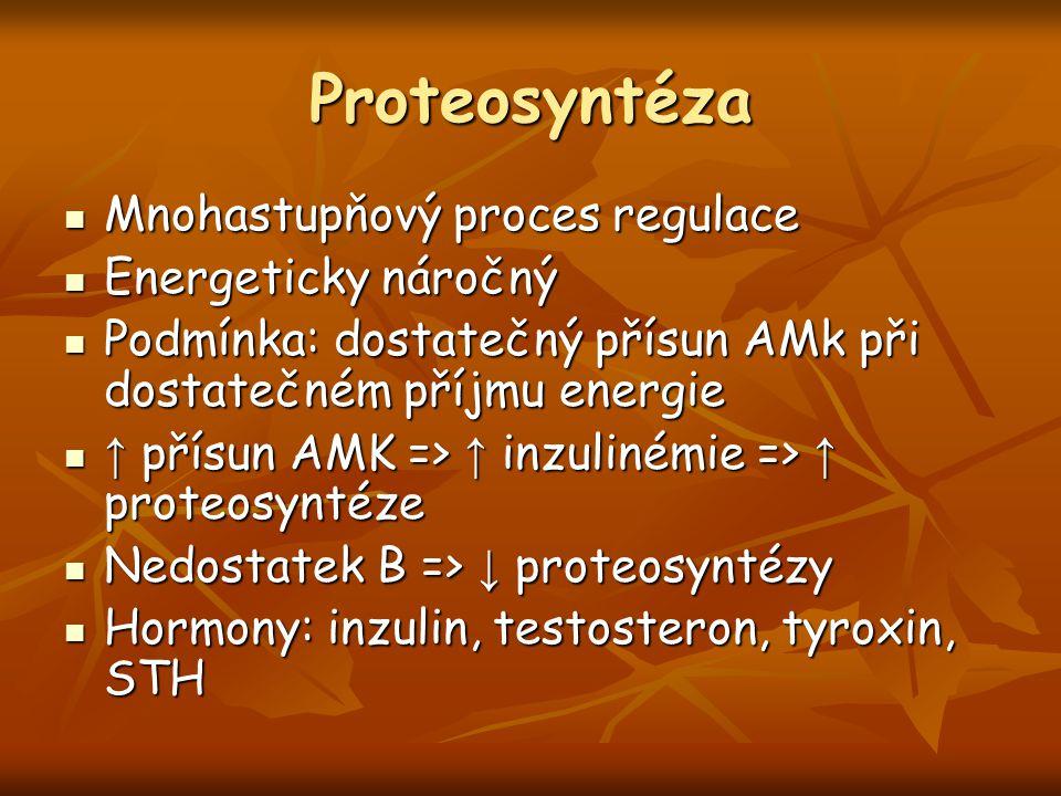 Proteosyntéza Mnohastupňový proces regulace Mnohastupňový proces regulace Energeticky náročný Energeticky náročný Podmínka: dostatečný přísun AMk při