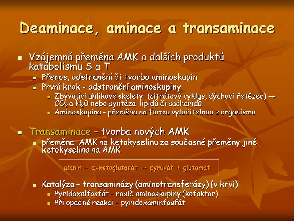 Deaminace, aminace a transaminace Vzájemná přeměna AMK a dalších produktů katabolismu S a T Vzájemná přeměna AMK a dalších produktů katabolismu S a T