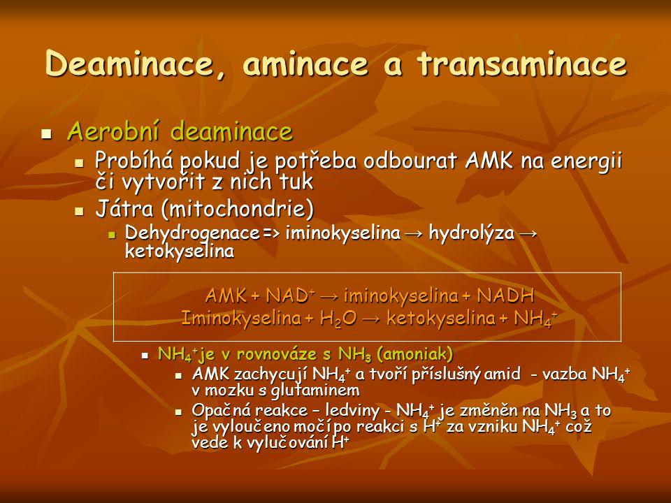 Deaminace, aminace a transaminace Aerobní deaminace Aerobní deaminace Probíhá pokud je potřeba odbourat AMK na energii či vytvořit z nich tuk Probíhá
