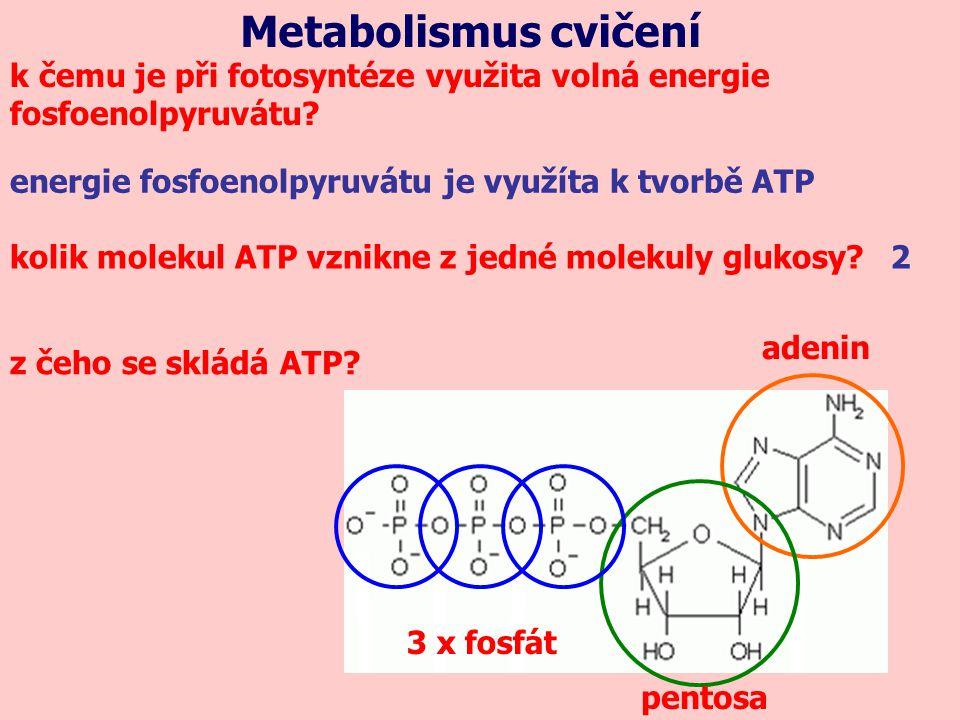 Metabolismus cvičení k čemu je při fotosyntéze využita volná energie fosfoenolpyruvátu.