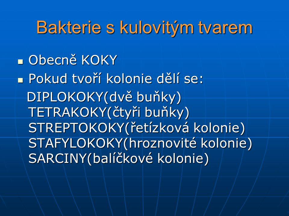 Bakterie s kulovitým tvarem Obecně KOKY Obecně KOKY Pokud tvoří kolonie dělí se: Pokud tvoří kolonie dělí se: DIPLOKOKY(dvě buňky) TETRAKOKY(čtyři buňky) STREPTOKOKY(řetízková kolonie) STAFYLOKOKY(hroznovité kolonie) SARCINY(balíčkové kolonie) DIPLOKOKY(dvě buňky) TETRAKOKY(čtyři buňky) STREPTOKOKY(řetízková kolonie) STAFYLOKOKY(hroznovité kolonie) SARCINY(balíčkové kolonie)