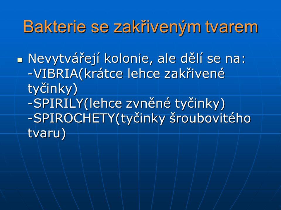 Bakterie se zakřiveným tvarem Nevytvářejí kolonie, ale dělí se na: -VIBRIA(krátce lehce zakřivené tyčinky) -SPIRILY(lehce zvněné tyčinky) -SPIROCHETY(tyčinky šroubovitého tvaru) Nevytvářejí kolonie, ale dělí se na: -VIBRIA(krátce lehce zakřivené tyčinky) -SPIRILY(lehce zvněné tyčinky) -SPIROCHETY(tyčinky šroubovitého tvaru)