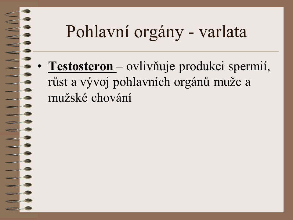 Pohlavní orgány - varlata Testosteron – ovlivňuje produkci spermií, růst a vývoj pohlavních orgánů muže a mužské chování
