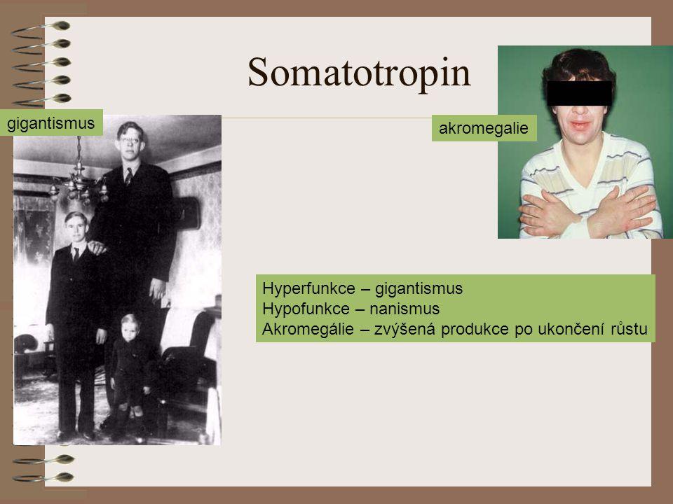 Somatotropin gigantismus akromegalie Hyperfunkce – gigantismus Hypofunkce – nanismus Akromegálie – zvýšená produkce po ukončení růstu