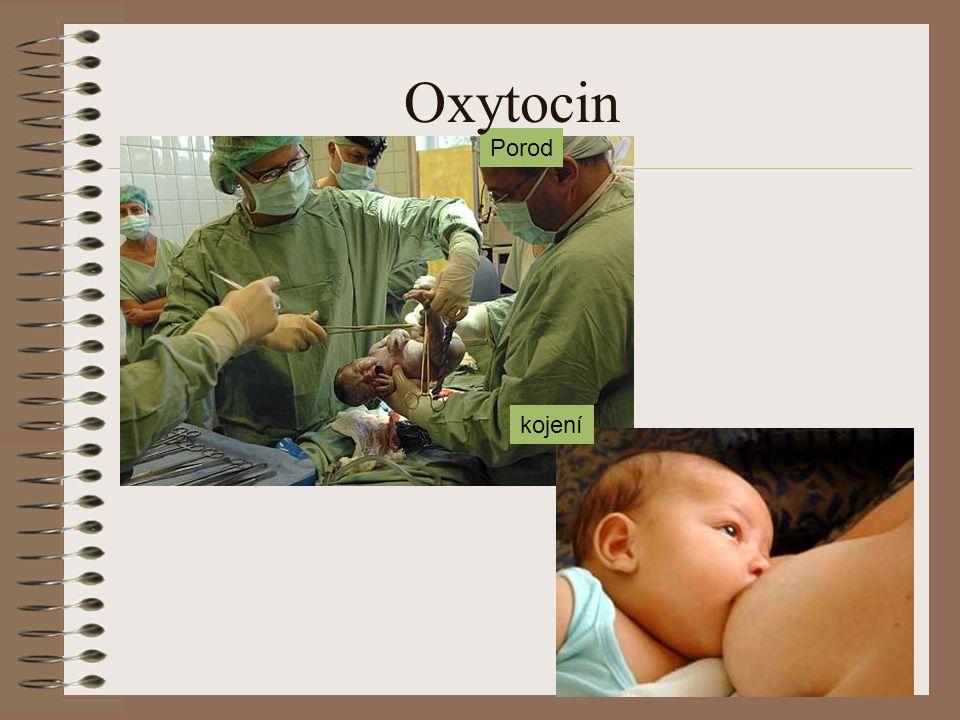 Porod kojení Oxytocin