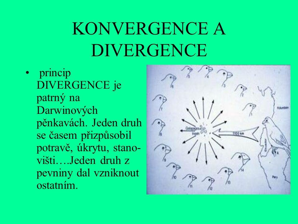 KONVERGENCE A DIVERGENCE princip DIVERGENCE je patrný na Darwinových pěnkavách. Jeden druh se časem přizpůsobil potravě, úkrytu, stano- višti….Jeden d