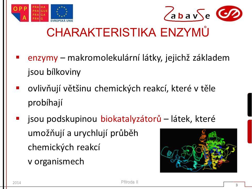 CHARAKTERISTIKA ENZYMŮ  enzymy – makromolekulární látky, jejichž základem jsou bílkoviny  ovlivňují většinu chemických reakcí, které v těle probíhaj