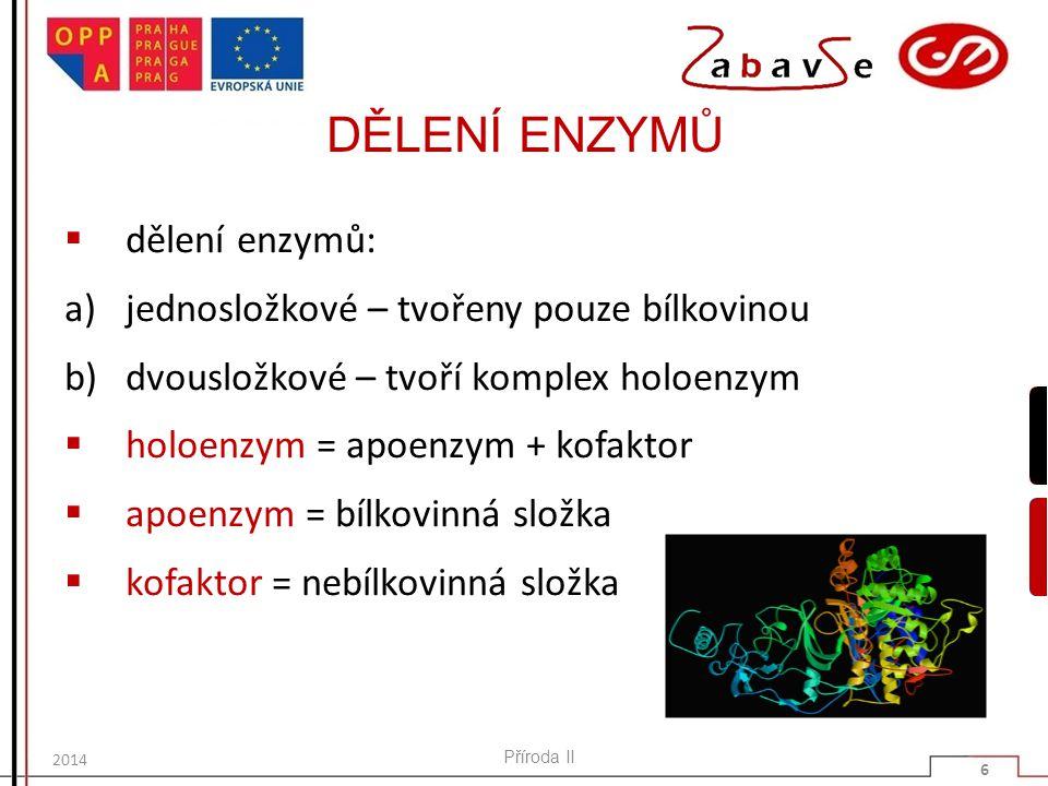 DĚLENÍ ENZYMŮ  dělení enzymů: a)jednosložkové – tvořeny pouze bílkovinou b)dvousložkové – tvoří komplex holoenzym  holoenzym = apoenzym + kofaktor 