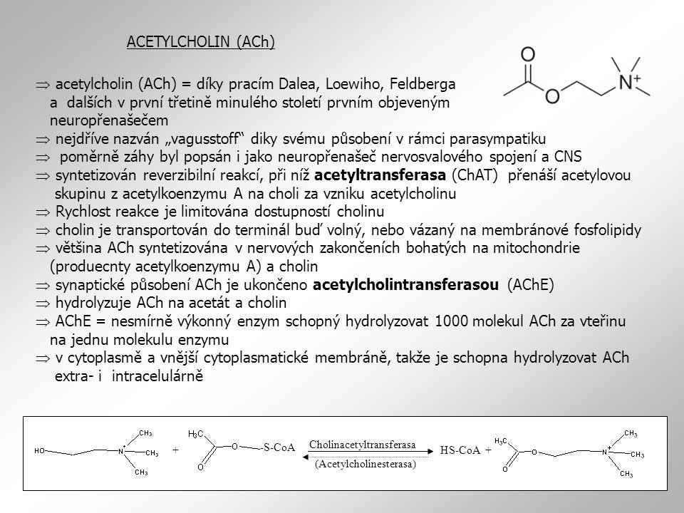 ACETYLCHOLIN (ACh)  acetylcholin (ACh) = díky pracím Dalea, Loewiho, Feldberga a dalších v první třetině minulého století prvním objeveným neuropřena
