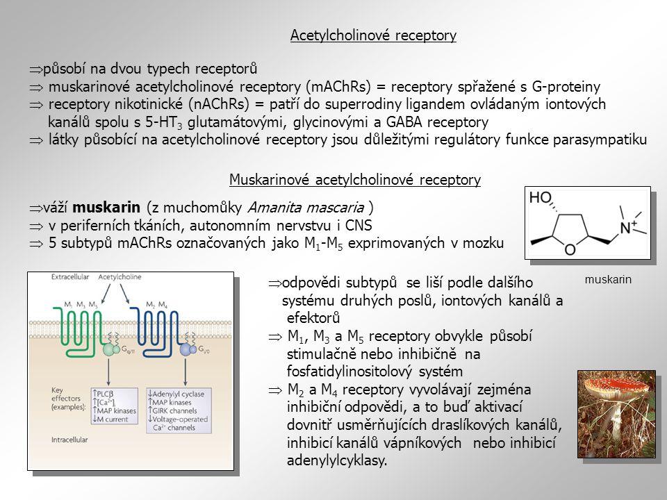 Acetylcholinové receptory  působí na dvou typech receptorů  muskarinové acetylcholinové receptory (mAChRs) = receptory spřažené s G-proteiny  recep