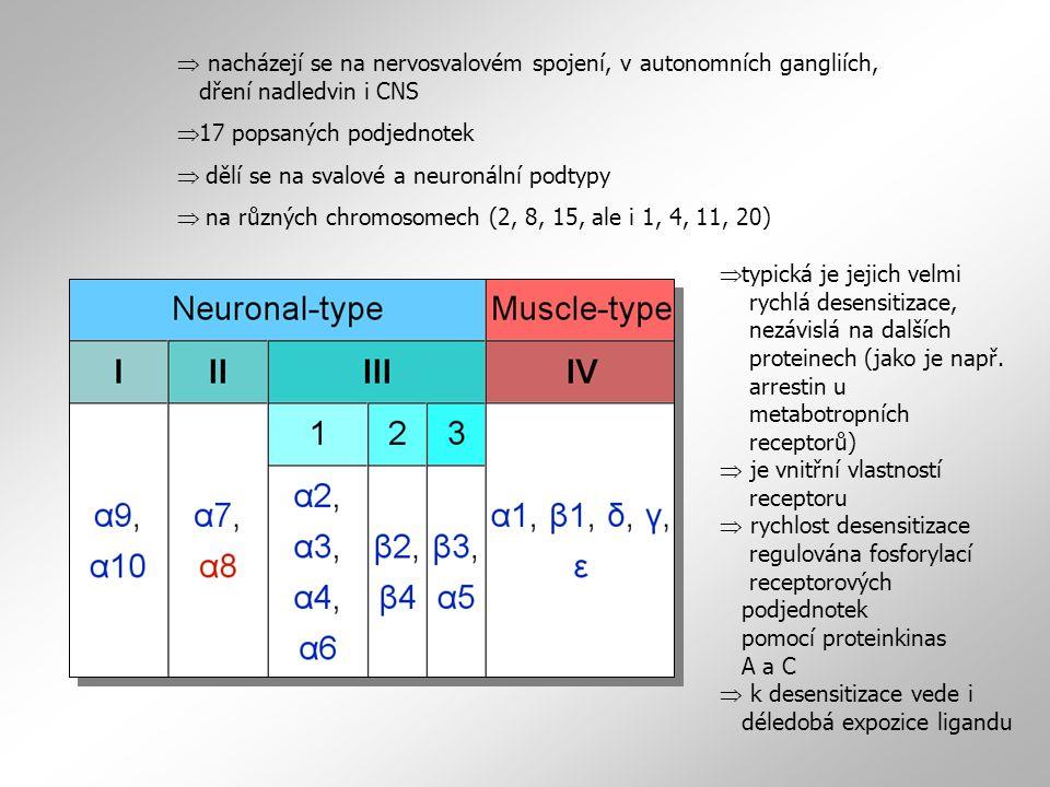  17 popsaných podjednotek  dělí se na svalové a neuronální podtypy  na různých chromosomech (2, 8, 15, ale i 1, 4, 11, 20)  nacházejí se na nervos