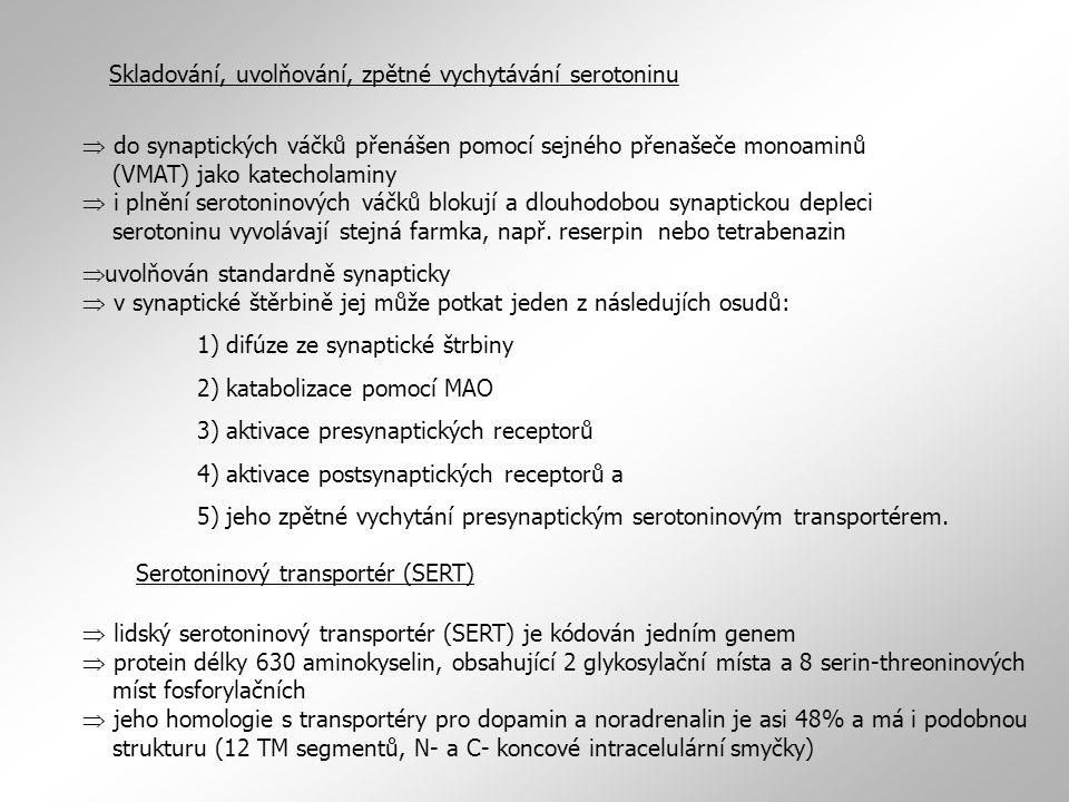 Skladování, uvolňování, zpětné vychytávání serotoninu  do synaptických váčků přenášen pomocí sejného přenašeče monoaminů (VMAT) jako katecholaminy 