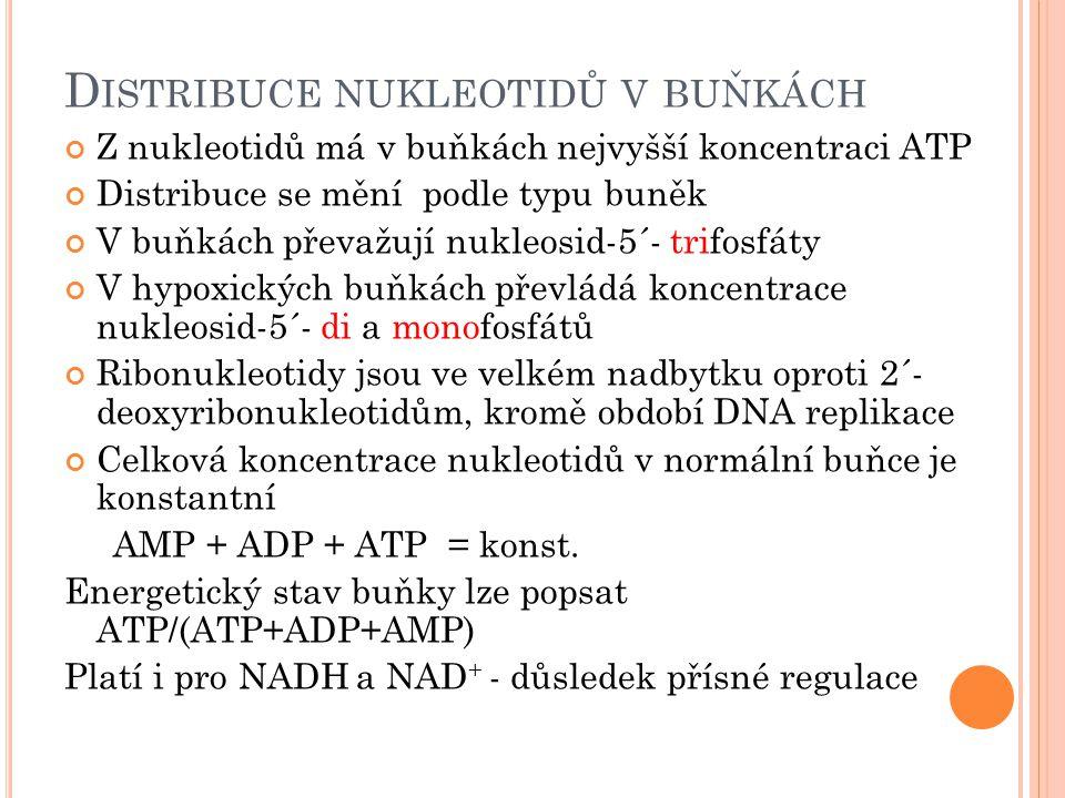 D ISTRIBUCE NUKLEOTIDŮ V BUŇKÁCH Z nukleotidů má v buňkách nejvyšší koncentraci ATP Distribuce se mění podle typu buněk V buňkách převažují nukleosid-