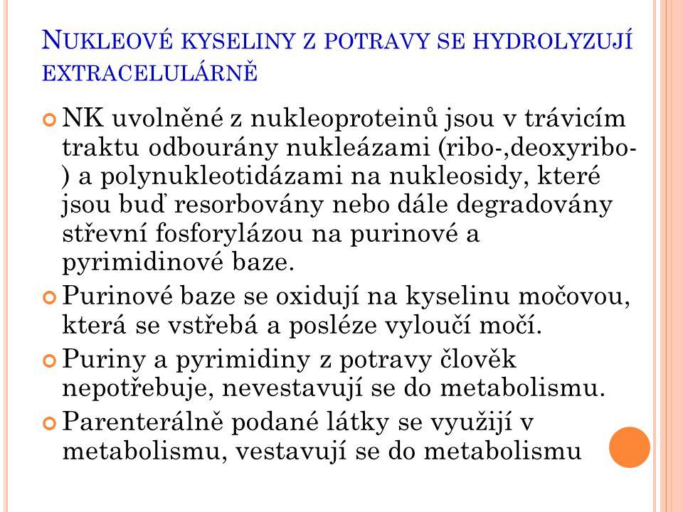 N UKLEOVÉ KYSELINY Z POTRAVY SE HYDROLYZUJÍ EXTRACELULÁRNĚ NK uvolněné z nukleoproteinů jsou v trávicím traktu odbourány nukleázami (ribo-,deoxyribo-