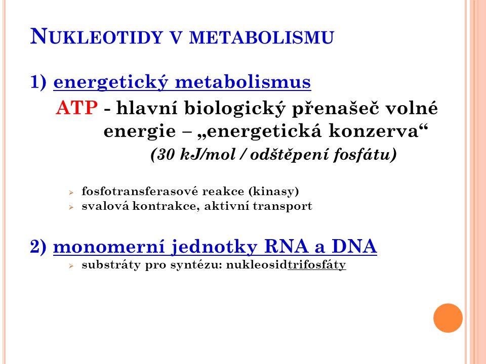 """N UKLEOTIDY V METABOLISMU 1) energetický metabolismus ATP - hlavní biologický přenašeč volné energie – """"energetická konzerva"""" (30 kJ/mol / odštěpení f"""