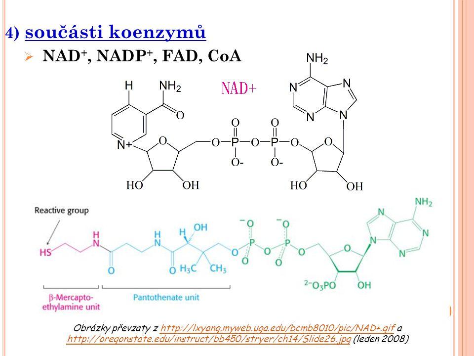 4) součásti koenzymů  NAD +, NADP +, FAD, CoA Obrázky převzaty z http://lxyang.myweb.uga.edu/bcmb8010/pic/NAD+.gif a http://oregonstate.edu/instruct/