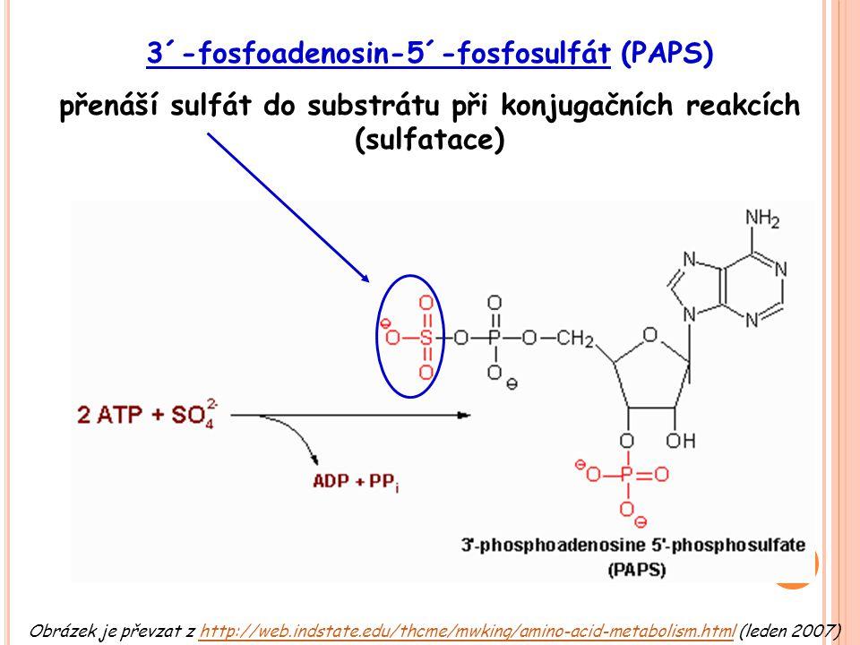 Obrázek je převzat z http://web.indstate.edu/thcme/mwking/amino-acid-metabolism.html (leden 2007)http://web.indstate.edu/thcme/mwking/amino-acid-metab