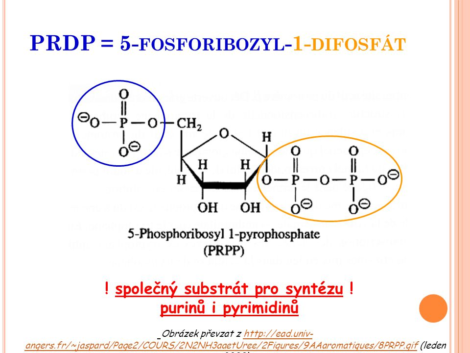 PRDP = 5- FOSFORIBOZYL -1- DIFOSFÁT Obrázek převzat z http://ead.univ- angers.fr/~jaspard/Page2/COURS/2N2NH3aaetUree/2Figures/9AAaromatiques/8PRPP.gif