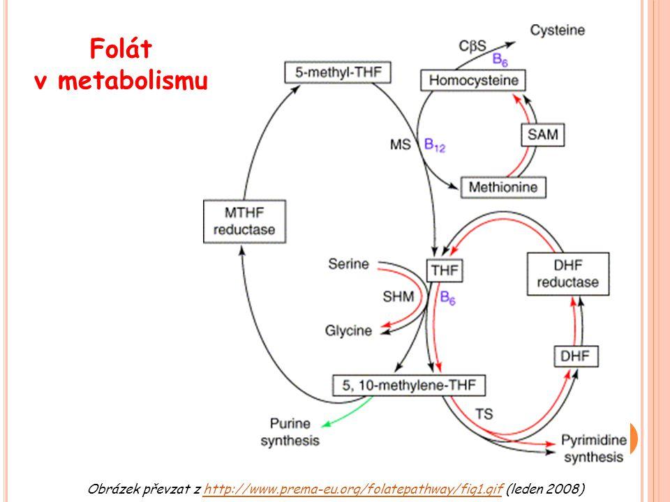 Obrázek převzat z http://www.prema-eu.org/folatepathway/fig1.gif (leden 2008)http://www.prema-eu.org/folatepathway/fig1.gif Folát v metabolismu