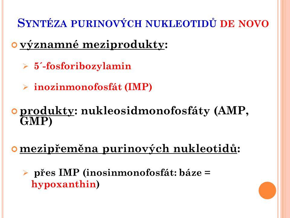 S YNTÉZA PURINOVÝCH NUKLEOTIDŮ DE NOVO významné meziprodukty:  5´-fosforibozylamin  inozinmonofosfát (IMP) produkty: nukleosidmonofosfáty (AMP, GMP)