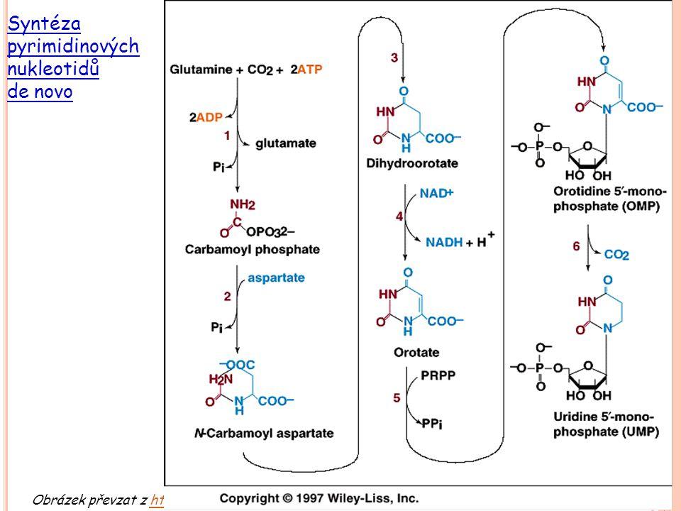 Obrázek převzat z http://web.indstate.edu/thcme/mwking/nucleotide-metabolism.html (leden 2007)http://web.indstate.edu/thcme/mwking/nucleotide-metaboli