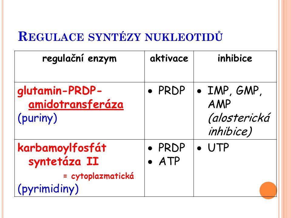 R EGULACE SYNTÉZY NUKLEOTIDŮ regulační enzymaktivaceinhibice glutamin-PRDP- amidotransferáza (puriny)  PRDP  IMP, GMP, AMP (alosterická inhibice) ka