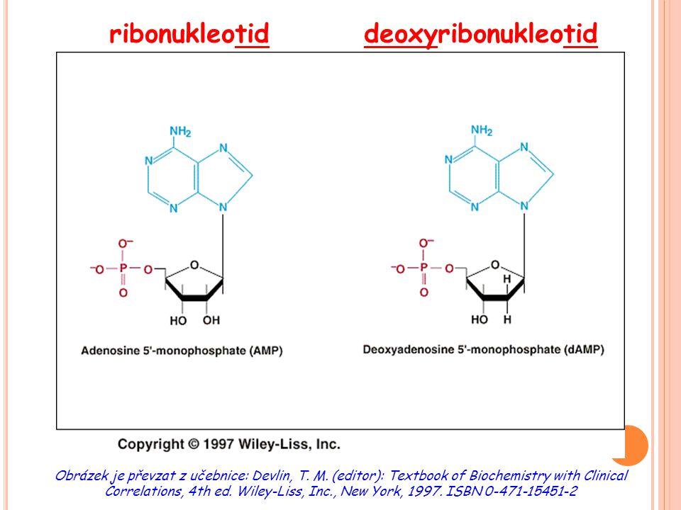 S YNTÉZA PURINOVÝCH NUKLEOTIDŮ DE NOVO významné meziprodukty:  5´-fosforibozylamin  inozinmonofosfát (IMP) produkty: nukleosidmonofosfáty (AMP, GMP) mezipřeměna purinových nukleotidů:  přes IMP (inosinmonofosfát: báze = hypoxanthin)